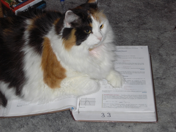 Delilah - The Math Cat